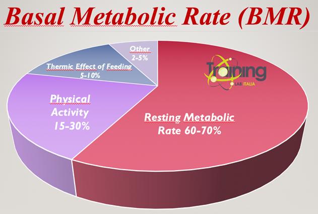 basale metabolisme