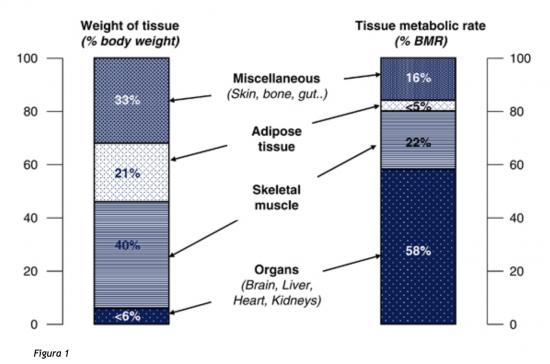 norme di percentuale di grasso corporeo acsm