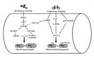 concurrent training a livello molecolare