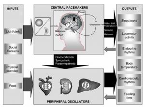 sistema circadiano