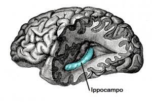 demenza ippocampo