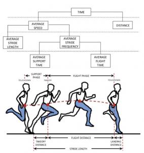 runner e biomeccanica