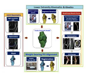 biomeccanica ginocchio runner