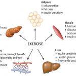 effetti metabolici fegato