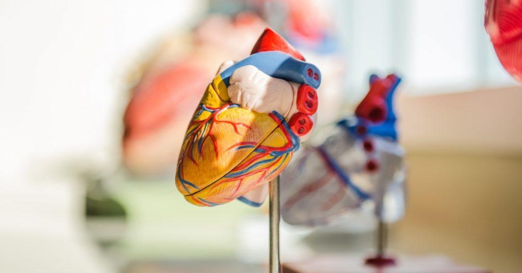 laboratorio per studio di esercizio fisico e riabilitazione cardiaca