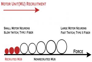 motor unit(MU) recruitment