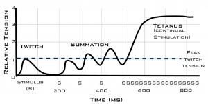 relative tension vs time