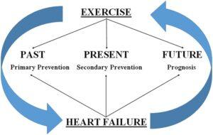 interazione tra esercizio e insufficienza cardiaca