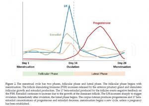 le fasi del ciclo mestruale