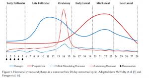 le sotto-fasi di un ciclo mestruale eumenorroico