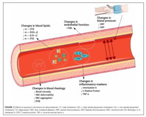 Effetti dell'esercizio fisico sui fattori di rischio per lo sviluppo di aterosclerosi
